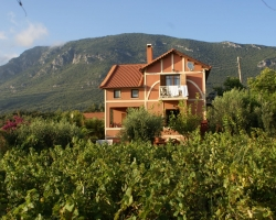 Weingarten - Korfu Strandvilla Meliti, Kanouli, Agios Matheos, Korfu, KorfuCorfu