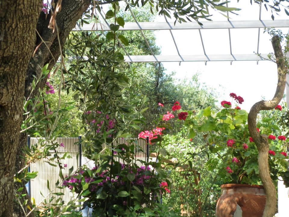 Garten - Korfu Ferienwohnung Flora, Acharavi, Korfu, Griechenland, KorfuCorfu.de
