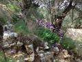 """Frühling auf Korfu - Korfu Ferienhäuser mit Pool """"Villen Zeta und Marianthi""""  in Nissaki, Ostküste, KorfuCorfu.de"""